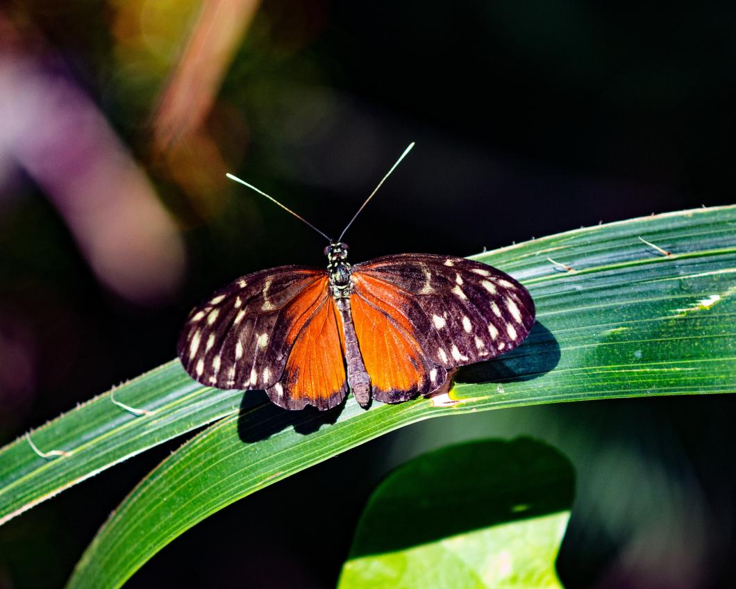 animal-biodiversity-butterfly-care-160941.jpg